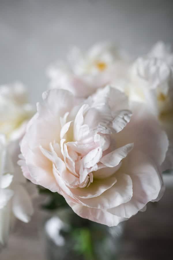 rezano-cvetje-POTONIKE
