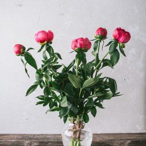rezano-cvetje-POTONIKE-RDECE
