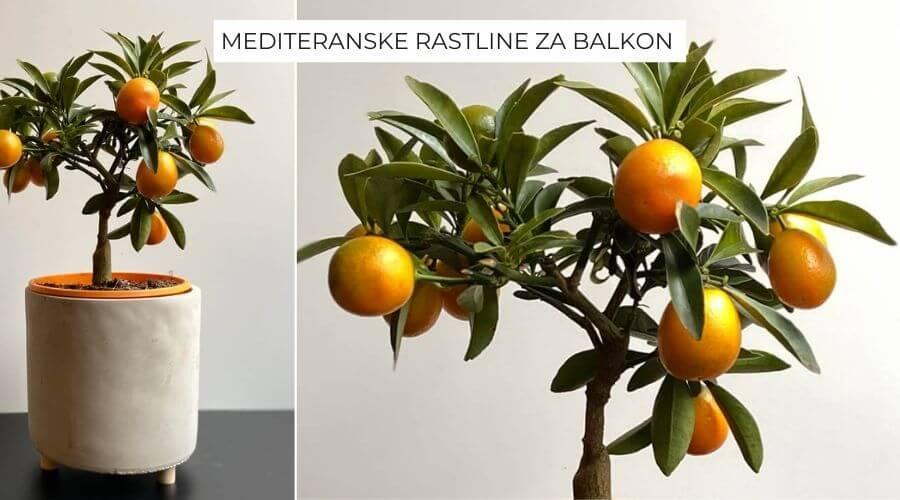 mediteranske-rastline-za-balkon