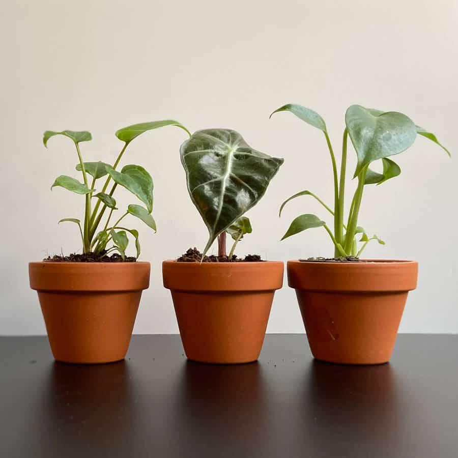 mini-sobne-rastline-1