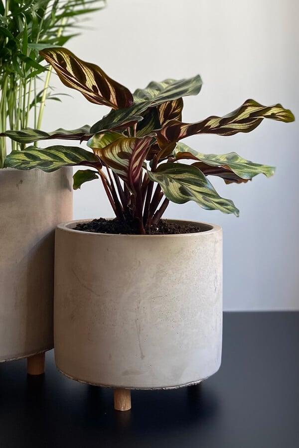 rastline-prijazne-do-hisnih-ljubljenckov-1
