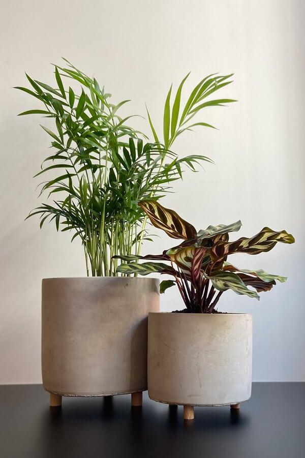 rastline-prijazne-do-hisnih-ljubljenckov-2