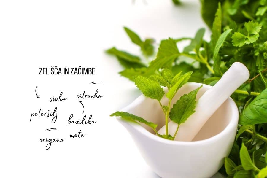 zacimbe-in-zelisca-1