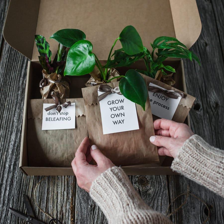 baby-plants-darilni-paket