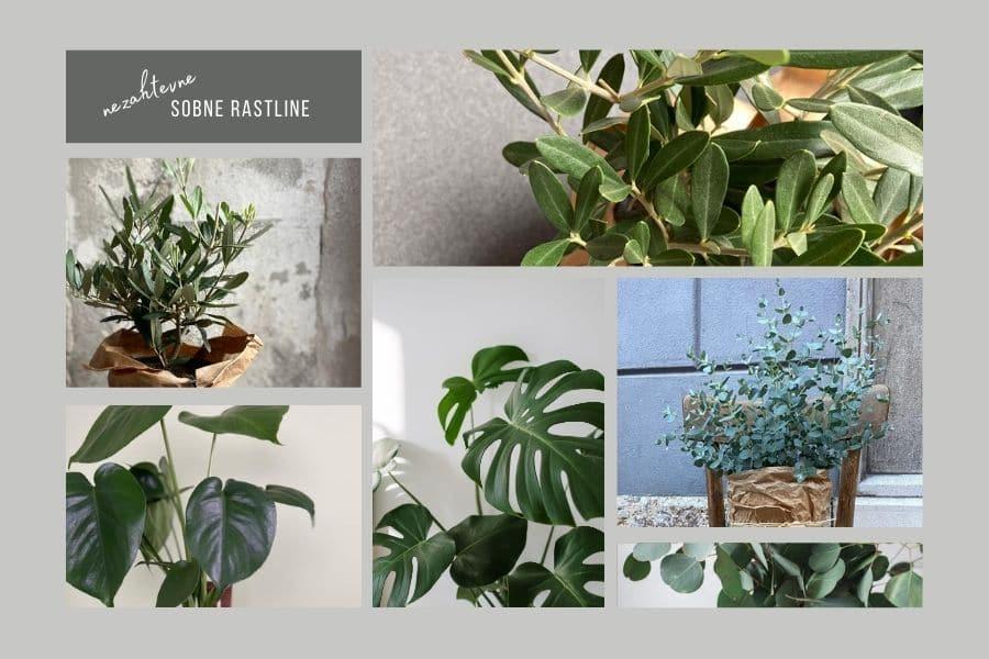 nezahtevne-sobne-rastline